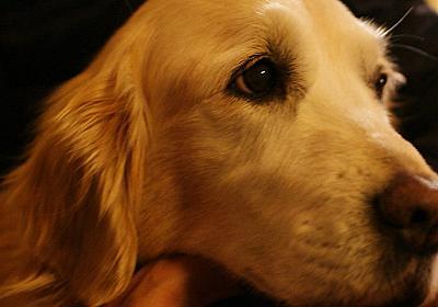 置き去り犬めぐちゃん「強制執行」~「動物はモノ」という悲しい現実(折原 みと) | FRaU