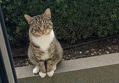 「今日も一緒に遊ぼ♪」親友の猫と遊ぶため、毎日やって来る隣の猫。いつも窓の外で礼儀正しく待っています (*´ω`*) | エウレカ!eureka! - もふもふ犬猫動画