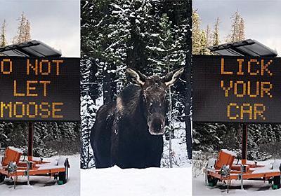 オンリーカナダ 「ヘラジカに車を舐めさせないでください」の標識が出現。その理由とは? : カラパイア