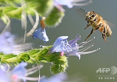 携帯の電磁放射線、昆虫激減の一因か 独研究 写真1枚 国際ニュース:AFPBB News