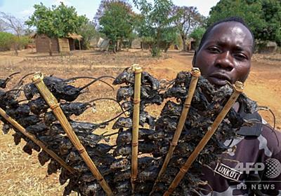 おやつの串焼きネズミが貴重なたんぱく源に コロナで食料不足悪化 マラウイ 写真1枚 国際ニュース:AFPBB News