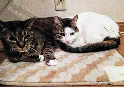 猫を撫でて一日終わる|猫を撫でて一日終わる|pha - 幻冬舎plus
