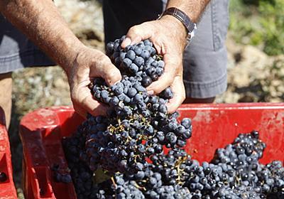 在仏の日本人ワイン農家夫婦に退去命令 「恥ずべき決定」に抗議の署名殺到 写真1枚 国際ニュース:AFPBB News