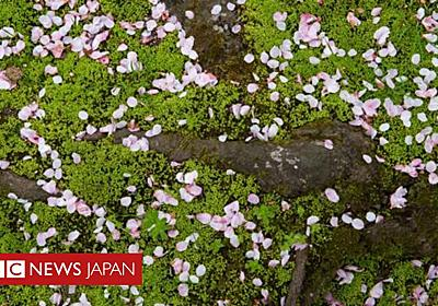 「わびさび」、日本独自の世界観 完璧を求めず - BBCニュース