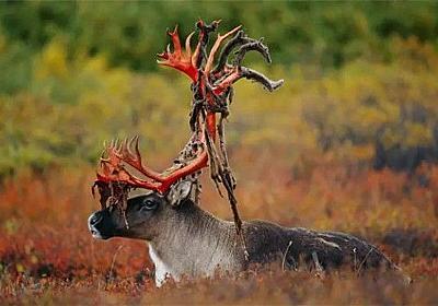 自然界の恐ろしさが押し寄せるナチュラル・ホラー。血も凍る戦慄の瞬間をとらえた写真(閲覧注意) : カラパイア