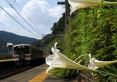 心に沁みない、ナゲーのフーケー現代版 定光寺・御嵩 - 鉄道も、写真も、ネコも、奥が深いのです!ナゲーのよっこらSHOT