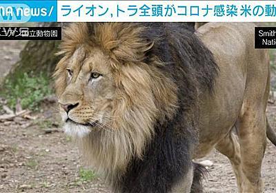 米の動物園で園内全てのライオン、トラがコロナ感染|テレ朝news-テレビ朝日のニュースサイト