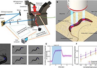 生きた線虫をロボットに改造 レーザー光で行動を制御:Innovative Tech - ITmedia NEWS