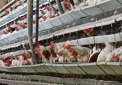 五輪の食材調達に厳しい目 家畜飼育基準、欧米より緩く: 日本経済新聞