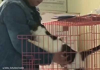 おいしいごはんをありがとう。でも一番欲しいものは...保護施設の男性にぬくもりを求めた猫 : カラパイア