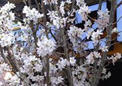 春をさがしに - デイリーポータルZ