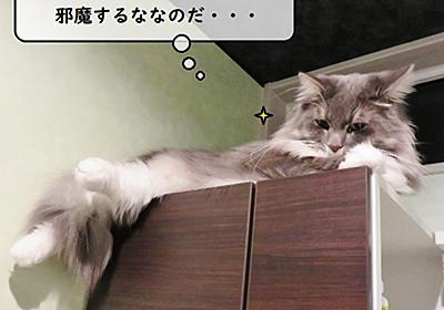 猫雑記 ~誰の仕業・・・?~ - 猫と雀と熱帯魚