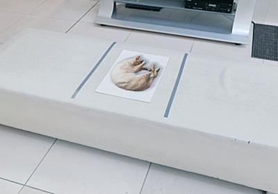 コロナ禍がなかったら存在しなかった『猫ちゃんが印刷して貼ってある椅子』になごむ「こ、これは座れない」 - Togetter