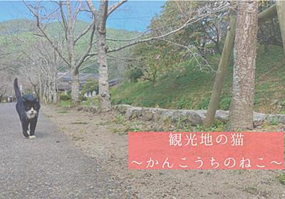 観光地の猫 - mogumogumo.jp
