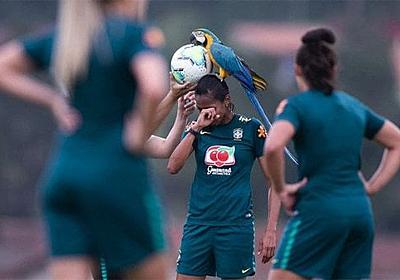 サッカーの試合にインコが乱入 ブラジル・リオデジャネイロ