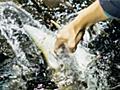 【予言】北海道「標津サーモン科学館」の『世界初!チョウザメ指パク体験』は全国区になるであろう - イーアイデムの地元メディア「ジモコロ」