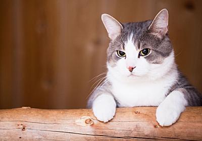 「ネコを置いて家を長期間不在にするときには何をすればいいのか」という問いにネコ専門家が回答