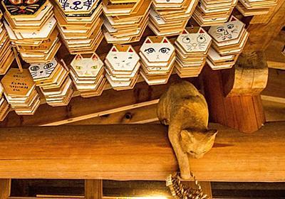 猫好きの新聖地!「雲林寺」は仏様も授与品も猫にまみれる猫寺だった!│観光・旅行ガイド - ぐるたび