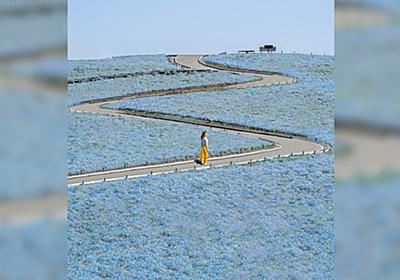 【Photoshop】ネモフィラでおなじみ、ひたち海浜公園の開門ダッシュに失敗するとこうなります「すごい技術だ」 - Togetter