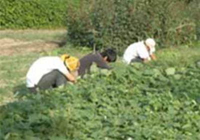 痛いニュース(ノ∀`) : 【農業】 ニートや引きこもりの就農支援に補助 農水省 - ライブドアブログ