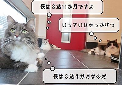 猫雑記 ~2021年9月の猫様体重測定~ - 猫と雀と熱帯魚