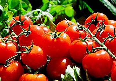 トマトが嫌いな理由と人生で損するので克服した話 - 遊びかたらう