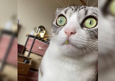 野菜泥棒を発見!本猫は『知りません、やってません』としらを切っているが物的証拠がばっちり残っている様子 - Togetter