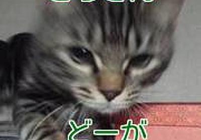 【猫さん動画】氷を取ろうとするとらさん | おーいネコさーん こっち向いて~