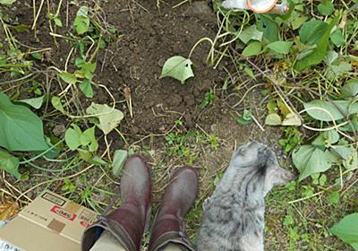 さつまいもは芋づる式には掘れないのだった - やれることだけやってみる