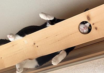 """今年も""""猫モノレール""""で暑さをしのぐにゃ パンチのきいている姿に「忍者?」「ジワるアングル」の声 - ねとらぼ"""