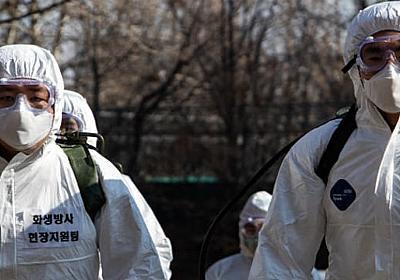 韓国でコロナ検査「世界最大級」のウラで医師が「動員」されていた!(崔 碩栄) | マネー現代 | 講談社(1/5)
