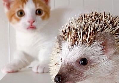"""も マンチカンもち丸 on Twitter: """"猫の毛をつけたくない洗濯物をここに入れて口を綴じておいたんですよ…… 毛どころか猫本体が入っておる。 https://t.co/WiGKXIxIns"""""""