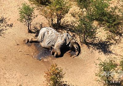 ボツワナのゾウ大量死、死因は自然発生の毒か 当局 写真8枚 国際ニュース:AFPBB News