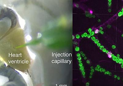 微生物を体内に取り込んで光合成させることで窒息した状態から生命活動を回復できるという衝撃の研究結果が発表される