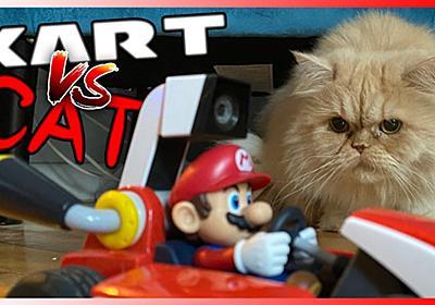 『マリオカート ライブ ホームサーキット』でコース内に犬猫の乱入が相次ぐ。コース妨害をする猫、ゲートを攻撃する猫、吠えまくる犬 | AUTOMATON