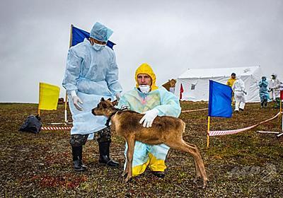 解ける永久凍土と目覚める病原体、ロシア北部の炭疽集団発生 写真5枚 国際ニュース:AFPBB News
