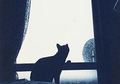 コンデジ漂流 #2 : COMPLEX CAT