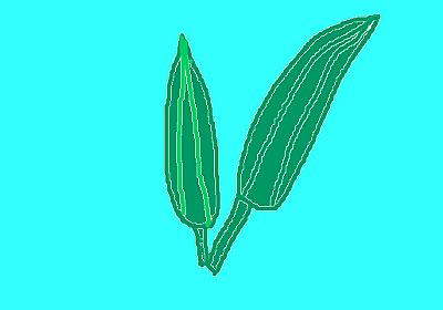 オクラの苗を植えました!初心者に人気の家庭菜園で作れる夏野菜をご紹介します! - フリーランサー花子の日記