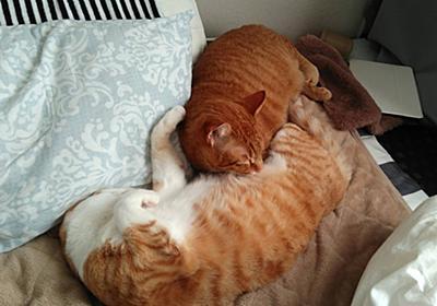 【癒やし】猫のかわいさで免疫力アップ - 猫飼い独女の節約&投資