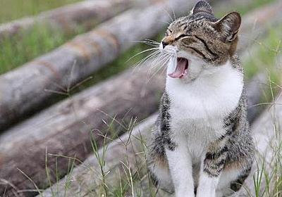 【猫島】GWは猫島で決定!猫パラダイスな島 17選 まとめ|カメラとおでかけ