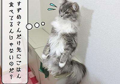猫雑記 ~食いしん坊むく~ - 猫と雀と熱帯魚