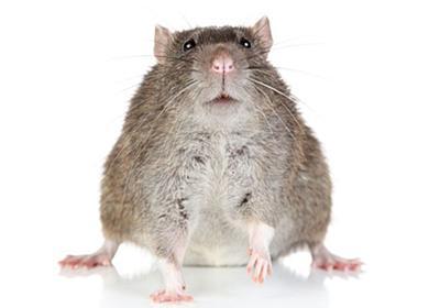 動物たちに蔓延する「肥満」のナゾを解く:研究結果|WIRED.jp