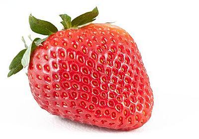 「イチゴのつぶつぶが発芽すると…どうなるか知ってた?」:らばQ