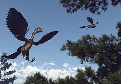 恐竜と鳥をつなぐミッシングリンクはどのようにして発見されたのか? : カラパイア
