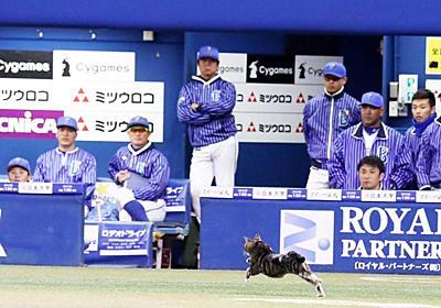 DeNA-阪神戦のグラウンドにネコ乱入 試合中断 - 野球 : 日刊スポーツ
