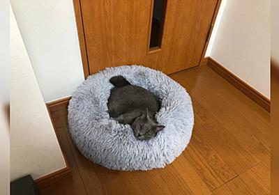 購入後半年間使ってもらえなかった猫用ベッドにネコチャンが寝てるのを見て大興奮「見つけて奇声あげた」 - Togetter