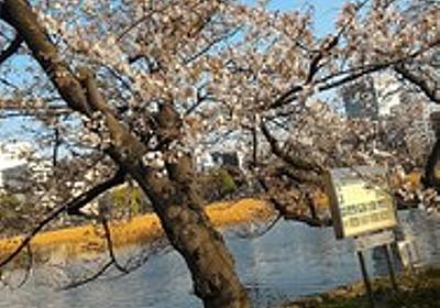 上野に花見をしに行ったー。: 猫好きなシングルマザーまりあんです