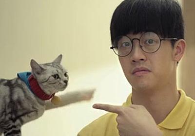 【衝撃動画】中国の実写版『ドラえもん』の本編が公開! 本物の猫がドラえもん!! そのクオリティが予想外な件 | ロケットニュース24