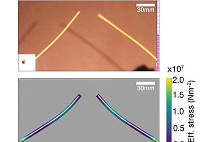 MIT、スパゲティを半分に折る方法を発見 3つ以上に折れる理由の判明から13年を経て - ねとらぼ
