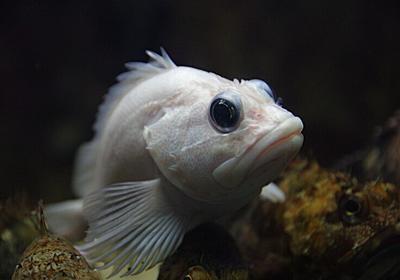 水族館の魚の撮影@悪戦苦闘編 : Pentax Heaven